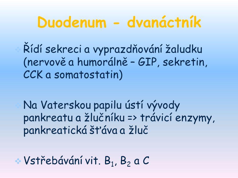 Duodenum - dvanáctník   Řídí sekreci a vyprazdňování žaludku (nervově a humorálně – GIP, sekretin, CCK a somatostatin)   Na Vaterskou papilu ústí