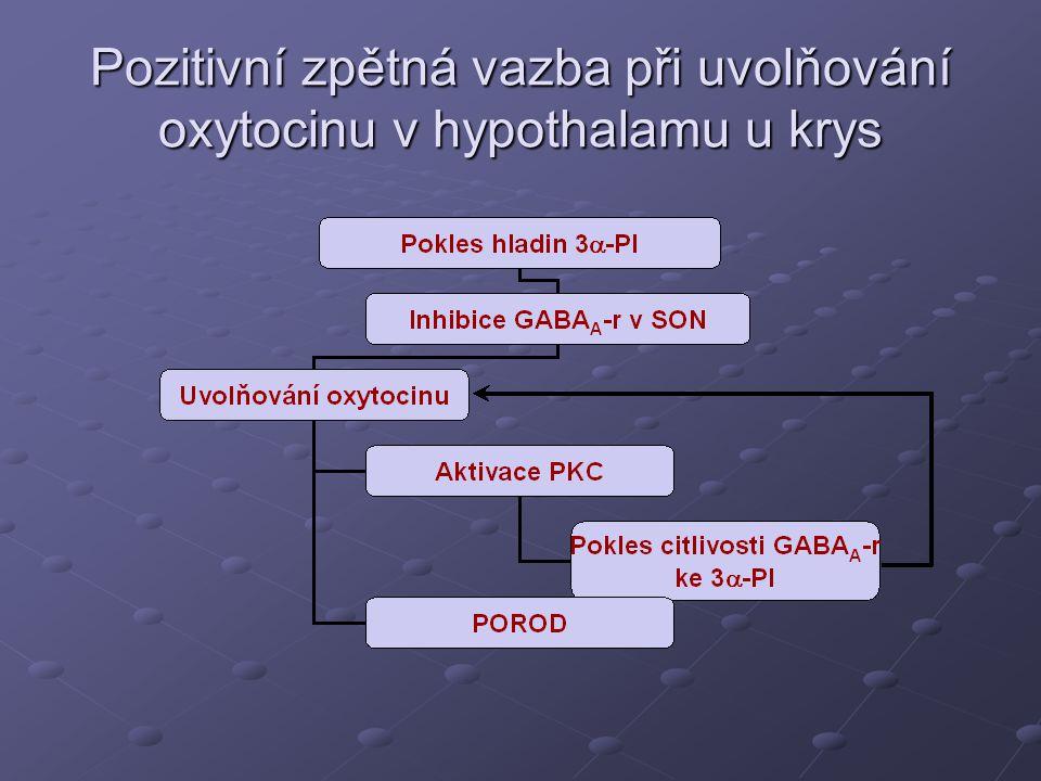 Pozitivní zpětná vazba při uvolňování oxytocinu v hypothalamu u krys