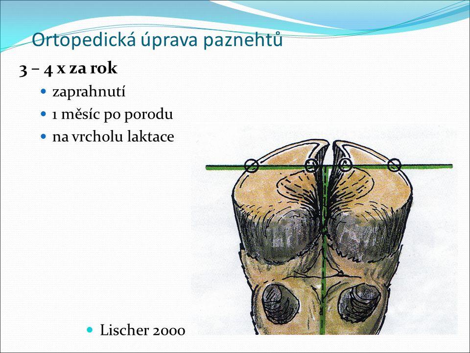 Ortopedická úprava paznehtů 3 – 4 x za rok zaprahnutí 1 měsíc po porodu na vrcholu laktace Lischer 2000