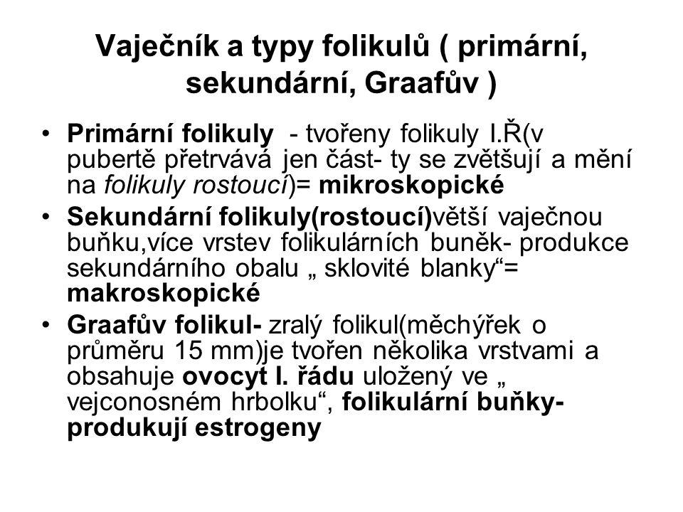 Vaječník a typy folikulů ( primární, sekundární, Graafův ) Primární folikuly - tvořeny folikuly I.Ř(v pubertě přetrvává jen část- ty se zvětšují a měn