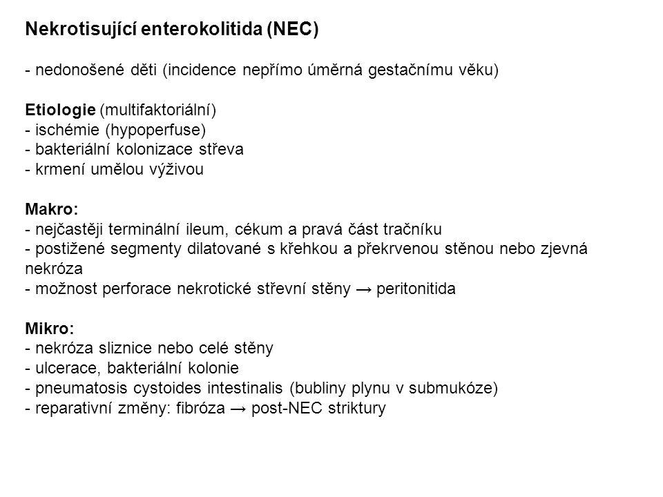 Nekrotisující enterokolitida (NEC) - nedonošené děti (incidence nepřímo úměrná gestačnímu věku) Etiologie (multifaktoriální) - ischémie (hypoperfuse) - bakteriální kolonizace střeva - krmení umělou výživou Makro: - nejčastěji terminální ileum, cékum a pravá část tračníku - postižené segmenty dilatované s křehkou a překrvenou stěnou nebo zjevná nekróza - možnost perforace nekrotické střevní stěny → peritonitida Mikro: - nekróza sliznice nebo celé stěny - ulcerace, bakteriální kolonie - pneumatosis cystoides intestinalis (bubliny plynu v submukóze) - reparativní změny: fibróza → post-NEC striktury