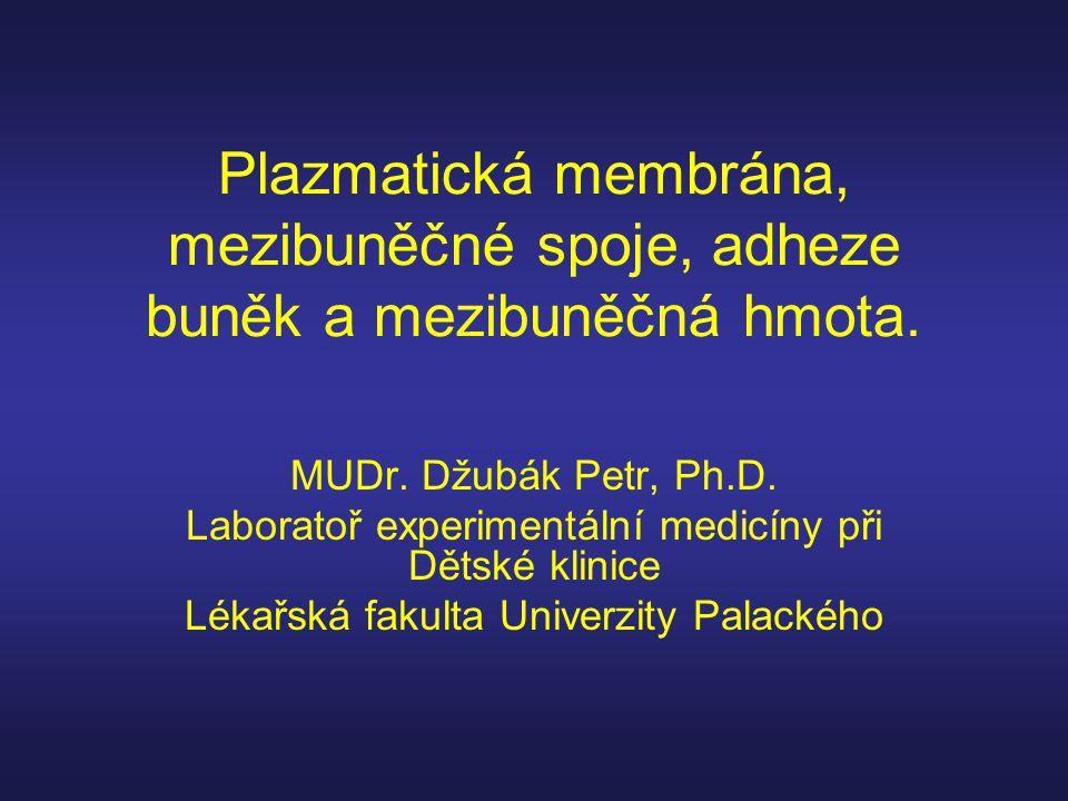 Plazmatická membrána, mezibuněčné spoje, adheze buněk a mezibuněčná hmota. MUDr. Džubák Petr, Ph.D. Laboratoř experimentální medicíny při Dětské klini