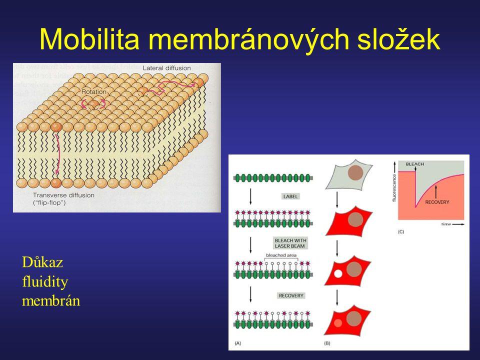 Mobilita membránových složek Důkaz fluidity membrán