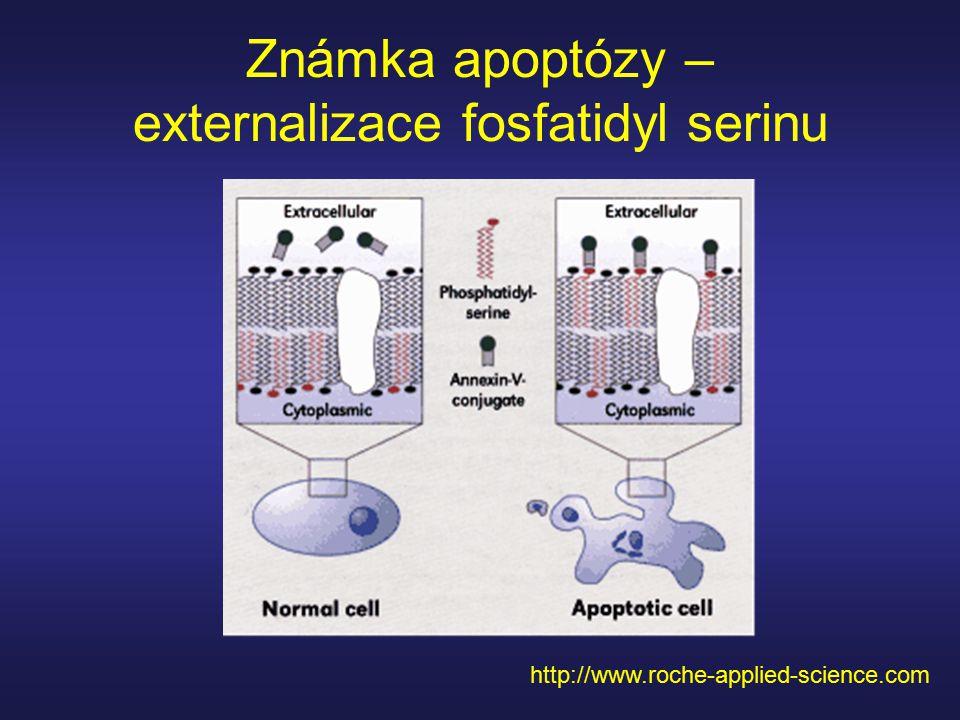 Známka apoptózy – externalizace fosfatidyl serinu http://www.roche-applied-science.com