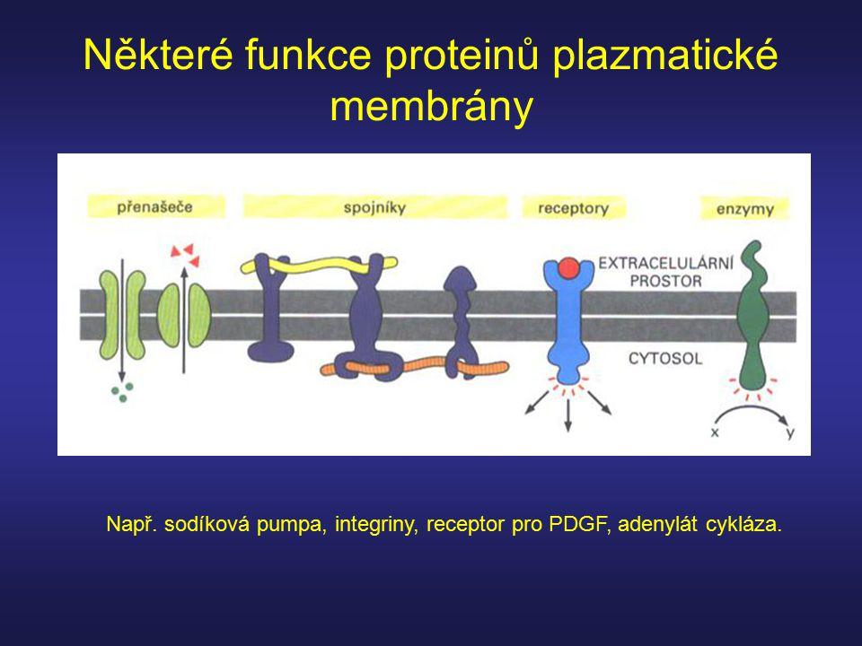 Některé funkce proteinů plazmatické membrány Např. sodíková pumpa, integriny, receptor pro PDGF, adenylát cykláza.