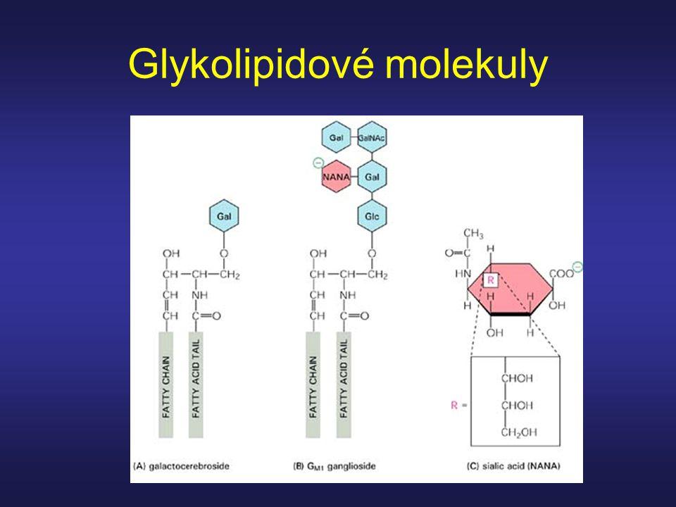 Glykolipidové molekuly