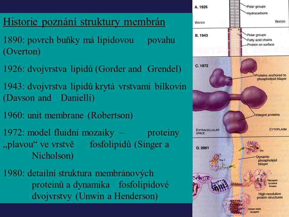Historie poznání struktury membrán 1890: povrch buňky má lipidovou povahu (Overton) 1926: dvojvrstva lipidů (Gorder and Grendel) 1943: dvojvrstva lipi