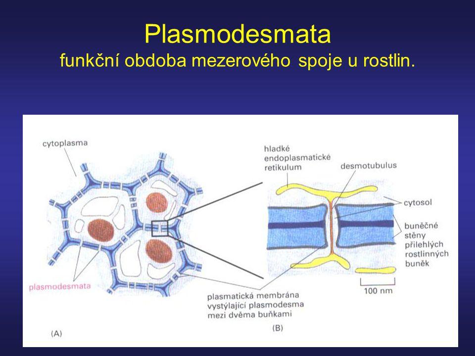 Plasmodesmata funkční obdoba mezerového spoje u rostlin.