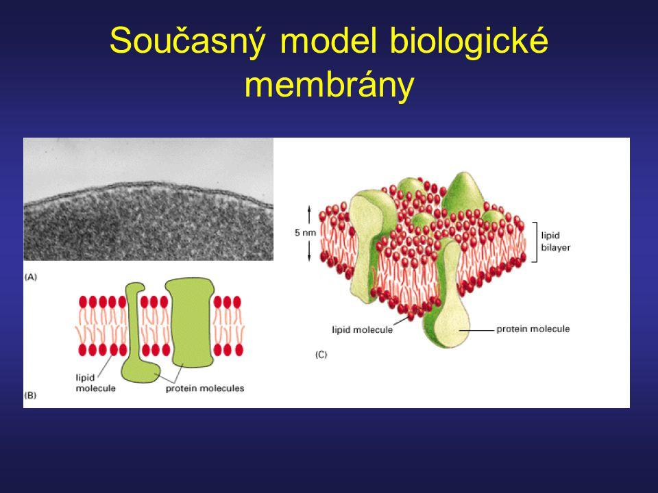 Současný model biologické membrány