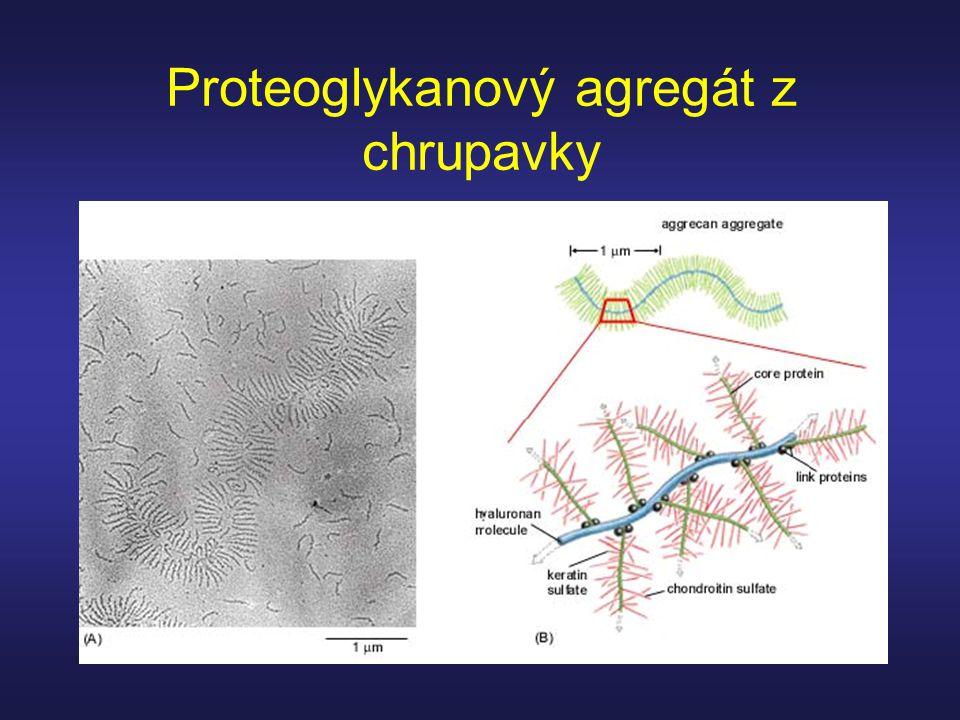 Proteoglykanový agregát z chrupavky