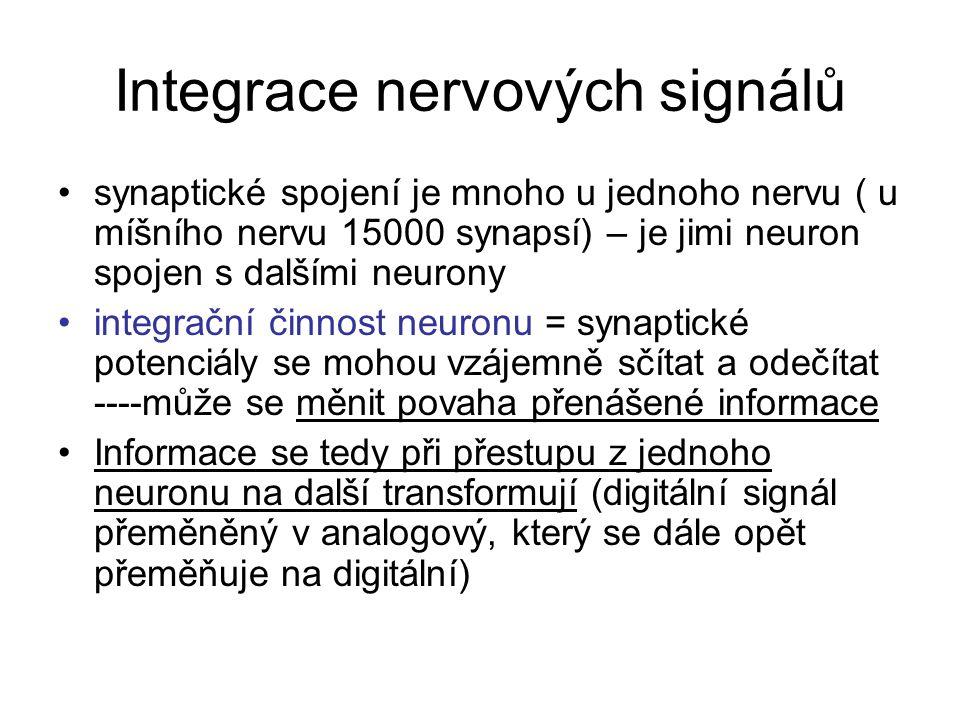 Integrace nervových signálů synaptické spojení je mnoho u jednoho nervu ( u míšního nervu 15000 synapsí) – je jimi neuron spojen s dalšími neurony integrační činnost neuronu = synaptické potenciály se mohou vzájemně sčítat a odečítat ----může se měnit povaha přenášené informace Informace se tedy při přestupu z jednoho neuronu na další transformují (digitální signál přeměněný v analogový, který se dále opět přeměňuje na digitální)