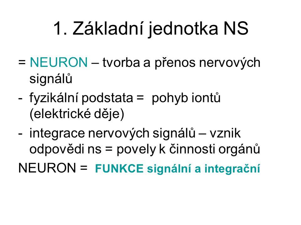 1. Základní jednotka NS = NEURON – tvorba a přenos nervových signálů -fyzikální podstata = pohyb iontů (elektrické děje) -integrace nervových signálů