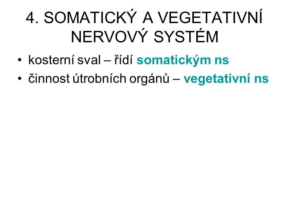 4. SOMATICKÝ A VEGETATIVNÍ NERVOVÝ SYSTÉM kosterní sval – řídí somatickým ns činnost útrobních orgánů – vegetativní ns