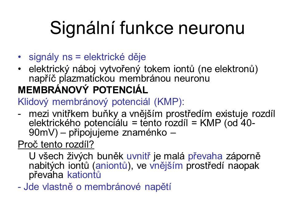 Signální funkce neuronu signály ns = elektrické děje elektrický náboj vytvořený tokem iontů (ne elektronů) napříč plazmatickou membránou neuronu MEMBRÁNOVÝ POTENCIÁL Klidový membránový potenciál (KMP): -mezi vnitřkem buňky a vnějším prostředím existuje rozdíl elektrického potenciálu = tento rozdíl = KMP (od 40- 90mV) – připojujeme znaménko – Proč tento rozdíl.