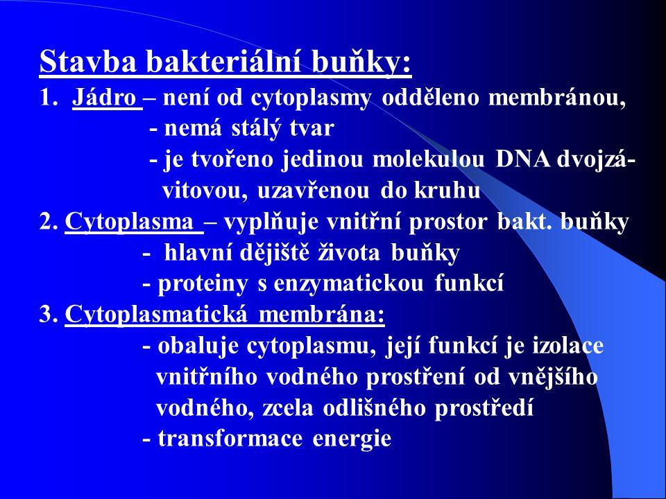 Stavba bakteriální buňky 2: 4.Buněčná stěna.