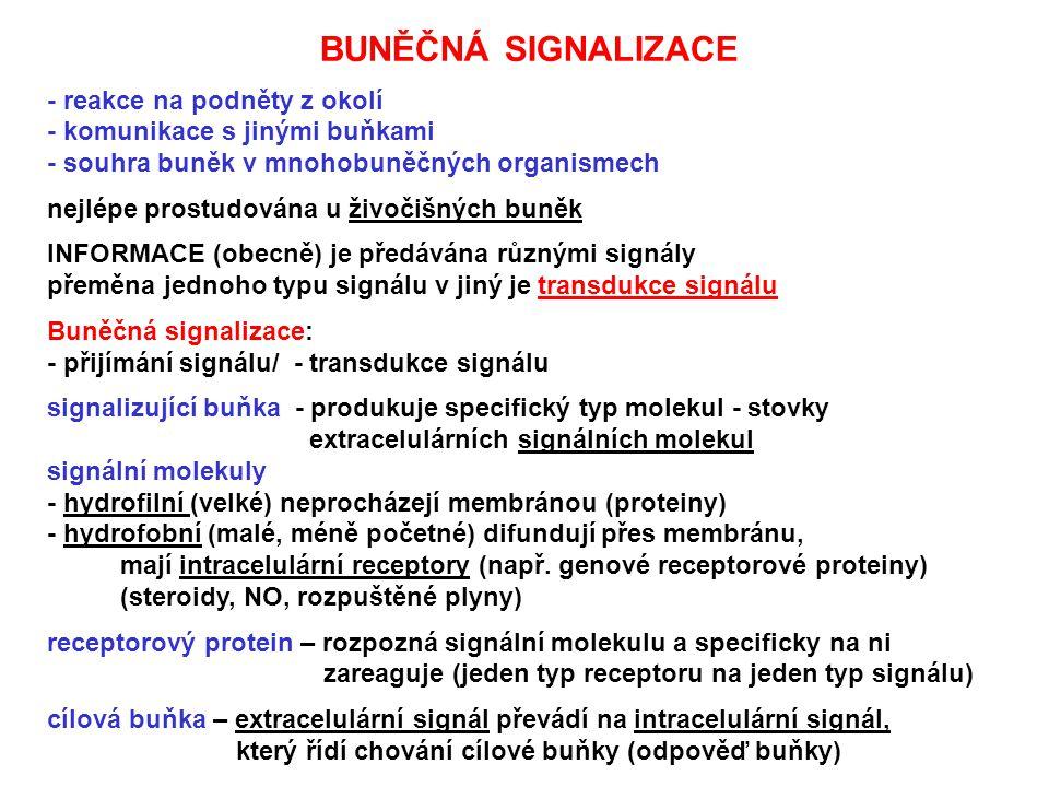 BUNĚČNÁ SIGNALIZACE - reakce na podněty z okolí - komunikace s jinými buňkami - souhra buněk v mnohobuněčných organismech nejlépe prostudována u živoč
