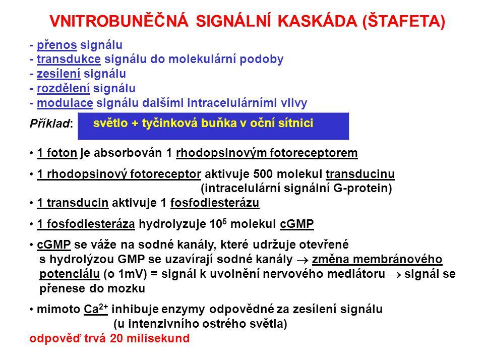 VNITROBUNĚČNÁ SIGNÁLNÍ KASKÁDA (ŠTAFETA) - přenos signálu - transdukce signálu do molekulární podoby - zesílení signálu - rozdělení signálu - modulace