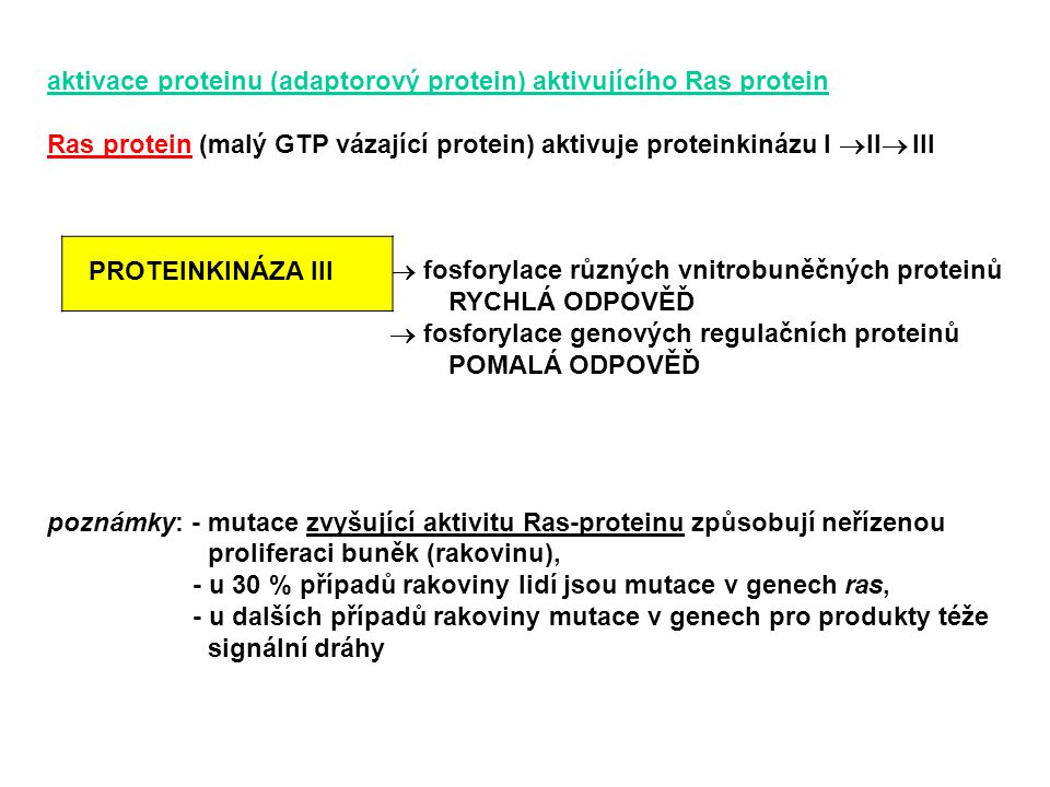 aktivace proteinu (adaptorový protein) aktivujícího Ras protein Ras protein (malý GTP vázající protein) aktivuje proteinkinázu I  II  III  fosforyl