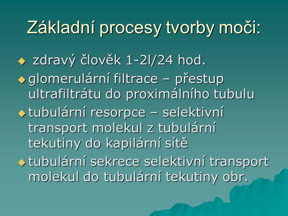 Základní procesy tvorby moči:  zdravý člověk 1-2l/24 hod.  glomerulární filtrace – přestup ultrafiltrátu do proximálního tubulu  tubulární resorpce