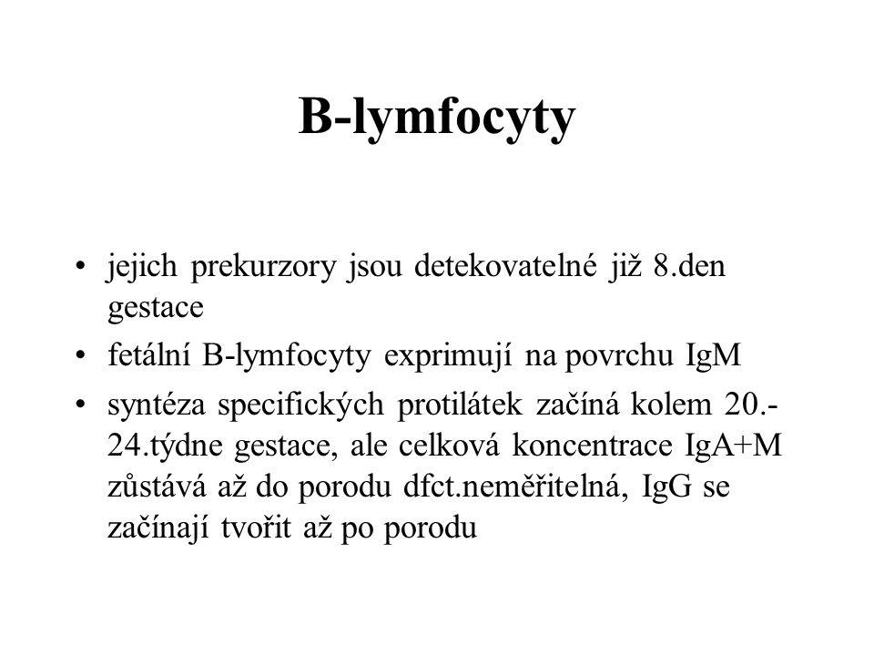 B-lymfocyty jejich prekurzory jsou detekovatelné již 8.den gestace fetální B-lymfocyty exprimují na povrchu IgM syntéza specifických protilátek začíná