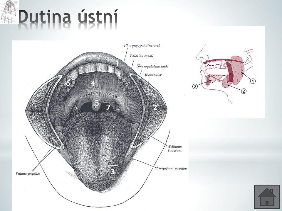 * Jaké jsou základní funkce ústní dutiny.