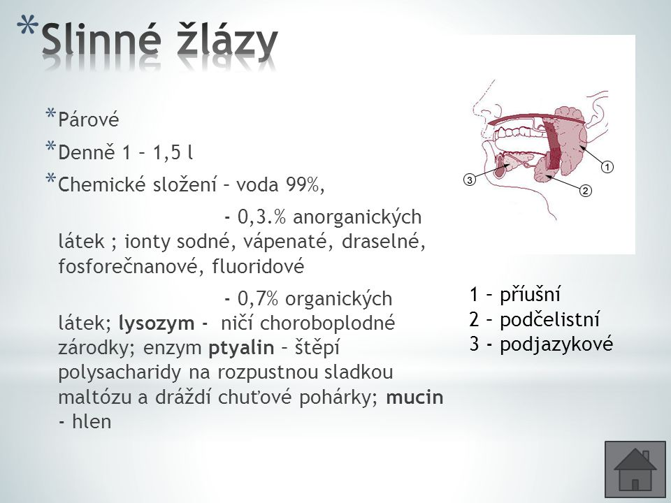 * Párové * Denně 1 – 1,5 l * Chemické složení – voda 99%, - 0,3.% anorganických látek ; ionty sodné, vápenaté, draselné, fosforečnanové, fluoridové - 0,7% organických látek; lysozym - ničí choroboplodné zárodky; enzym ptyalin – štěpí polysacharidy na rozpustnou sladkou maltózu a dráždí chuťové pohárky; mucin - hlen 1 – příušní 2 – podčelistní 3 - podjazykové
