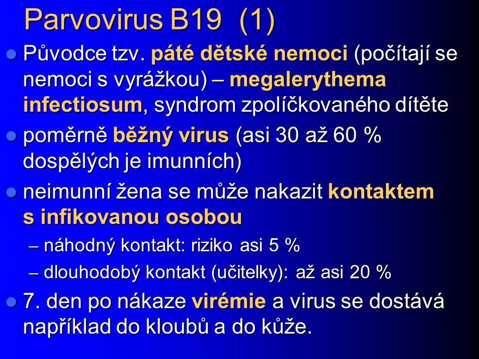 Parvovirus B19 (1) Původce tzv. páté dětské nemoci (počítají se nemoci s vyrážkou) – megalerythema infectiosum, syndrom zpolíčkovaného dítěte Původce