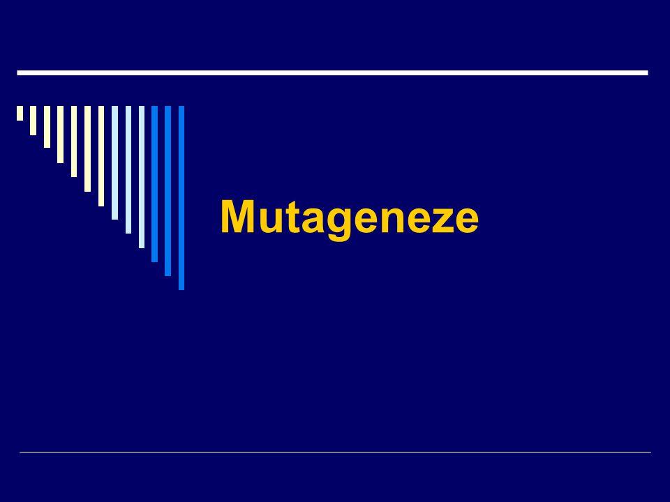 Mutace = náhlá, neusměrněná, trvalá změna genetického materiálu Dělení mutací: Mutace: spontánní indukované Mutace: somatické gametické Mutace: tiché=tolerované=neutrální ztrátové výhodné