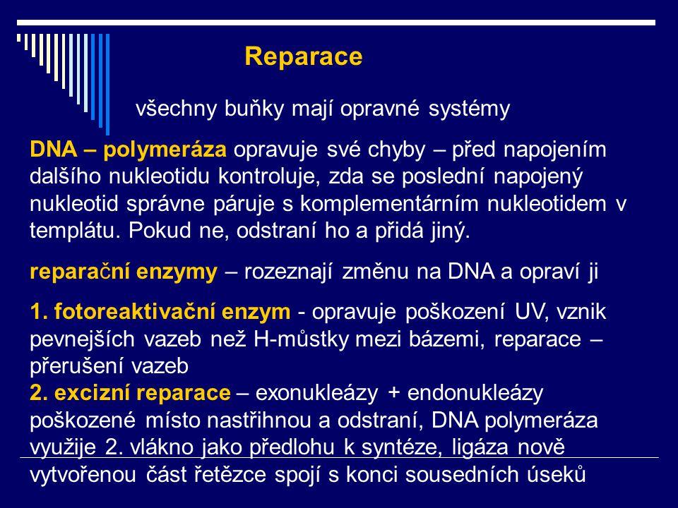 všechny buňky mají opravné systémy DNA – polymeráza opravuje své chyby – před napojením dalšího nukleotidu kontroluje, zda se poslední napojený nukleo