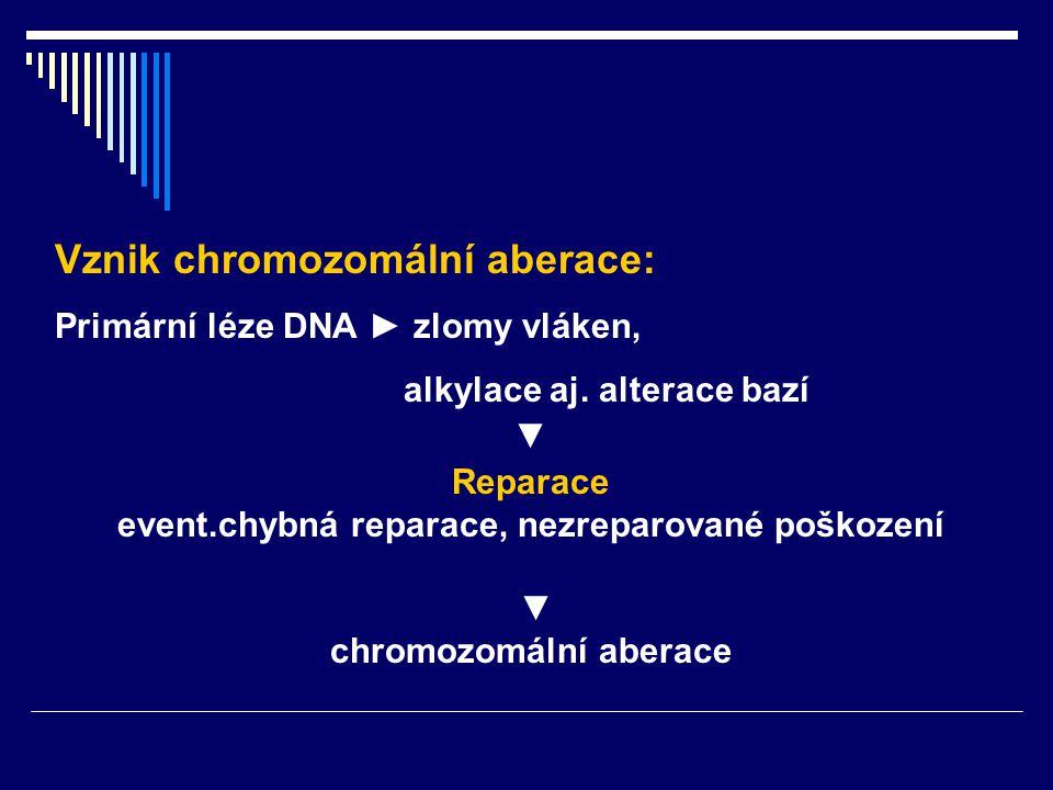Vznik chromozomální aberace: Primární léze DNA ► zlomy vláken, alkylace aj. alterace bazí ▼ Reparace event.chybná reparace, nezreparované poškození ▼