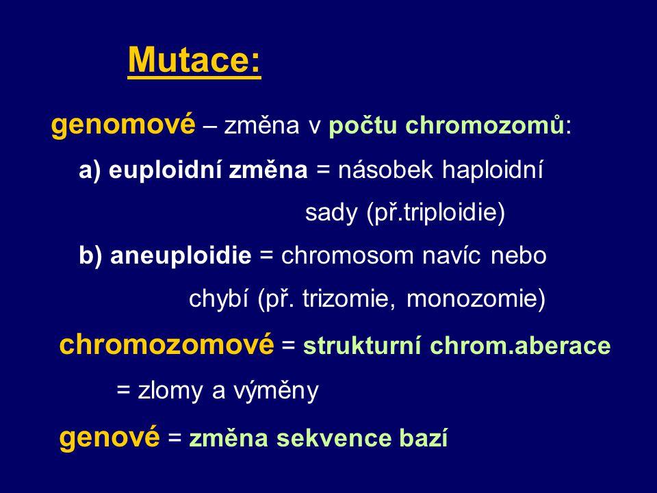 b) 3 nebo násobek 3 bazí Př.: cystická fibrosa nejčastěji delece 3 bazí, chybí 1 AK ( např.