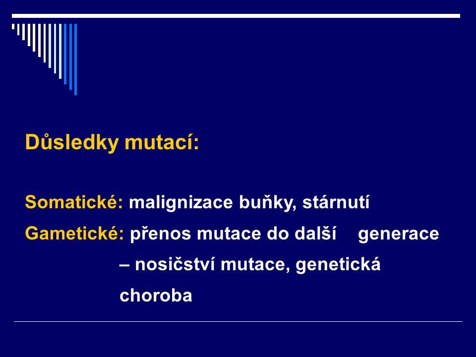 Důsledky mutací: Somatické: malignizace buňky, stárnutí Gametické: přenos mutace do další generace – nosičství mutace, genetická choroba
