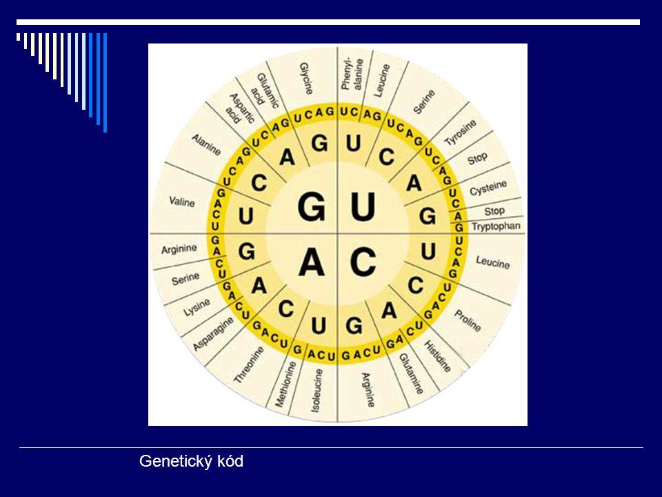Příklady mutací: A) SUBSTITUCE záměna 1 baze = záměna 1AK MISSESNSE MUTACE - chybný smysl Př.: srpkovitá anemie G A G → G U G v beta globinovém genu glu.acid → val → HbS
