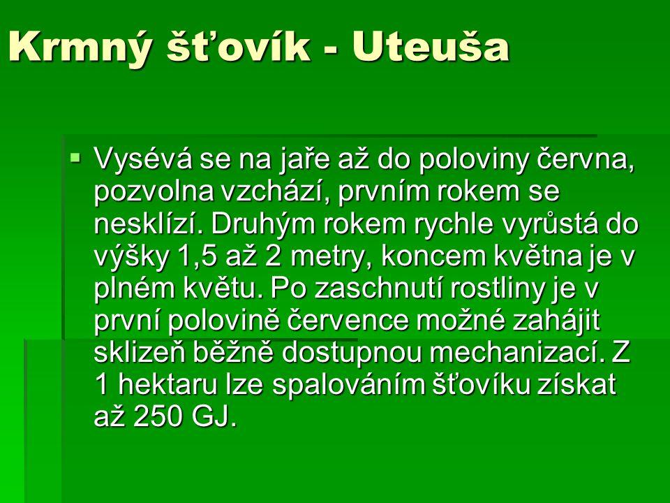 Krmný šťovík - Uteuša  Vysévá se na jaře až do poloviny června, pozvolna vzchází, prvním rokem se nesklízí. Druhým rokem rychle vyrůstá do výšky 1,5