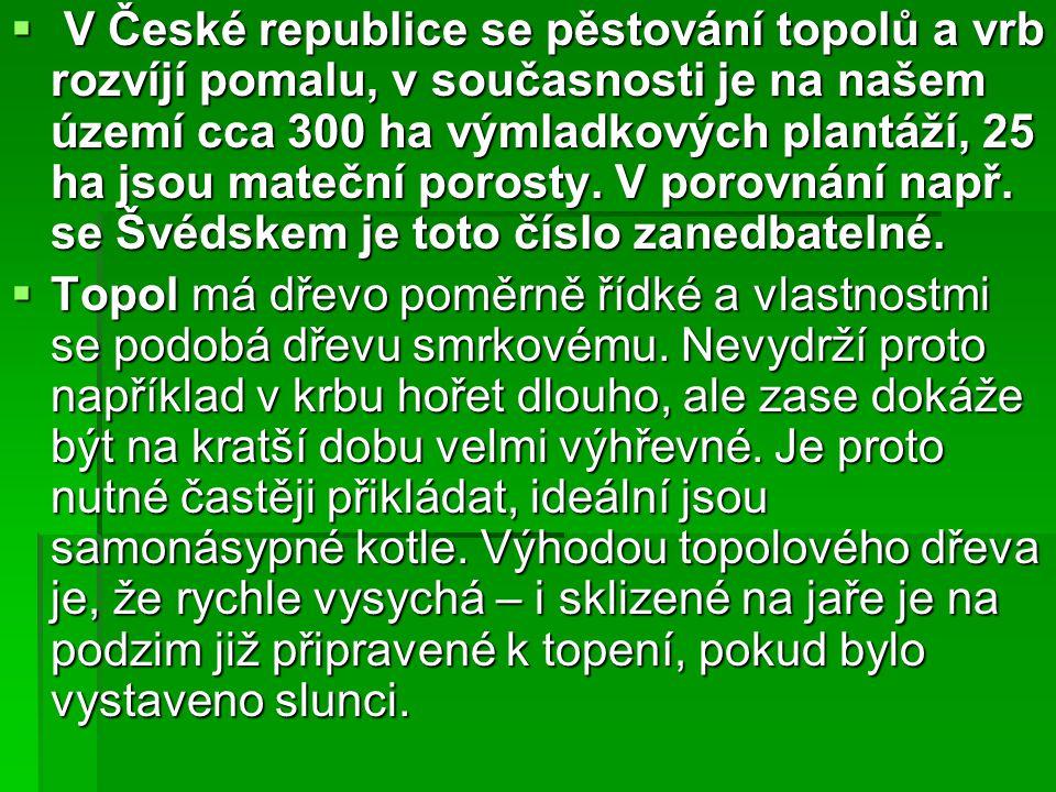  V České republice se pěstování topolů a vrb rozvíjí pomalu, v současnosti je na našem území cca 300 ha výmladkových plantáží, 25 ha jsou mateční por