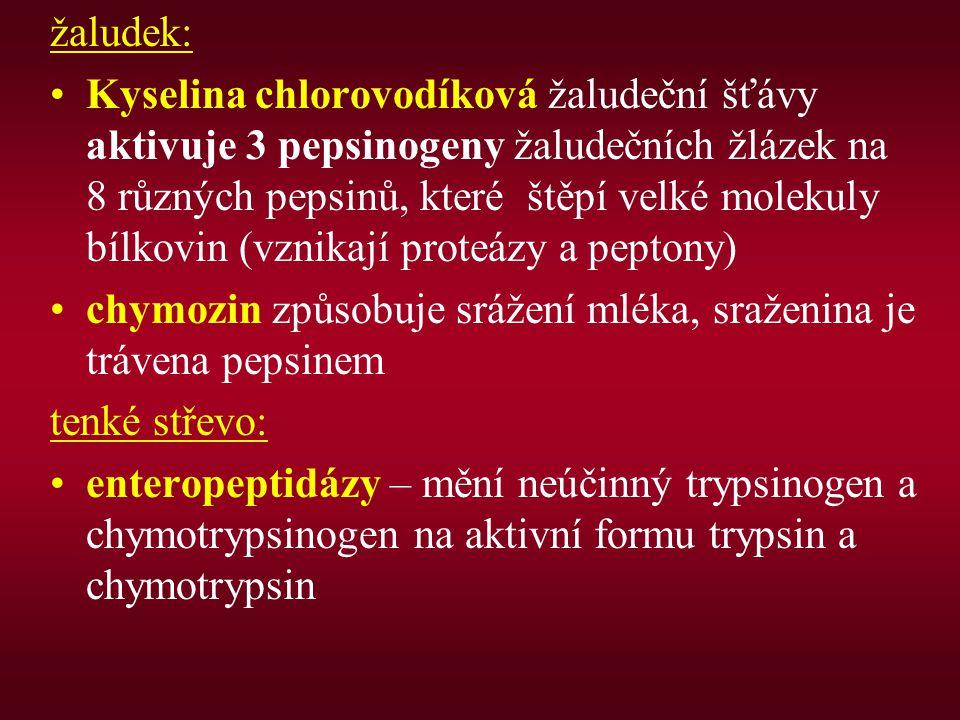 žaludek: Kyselina chlorovodíková žaludeční šťávy aktivuje 3 pepsinogeny žaludečních žlázek na 8 různých pepsinů, které štěpí velké molekuly bílkovin (vznikají proteázy a peptony) chymozin způsobuje srážení mléka, sraženina je trávena pepsinem tenké střevo: enteropeptidázy – mění neúčinný trypsinogen a chymotrypsinogen na aktivní formu trypsin a chymotrypsin
