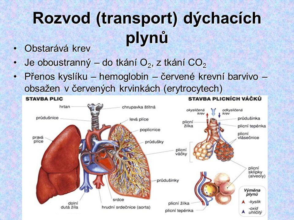 Rozvod (transport) dýchacích plynů Obstarává krevObstarává krev Je oboustranný – do tkání O 2, z tkání CO 2Je oboustranný – do tkání O 2, z tkání CO 2