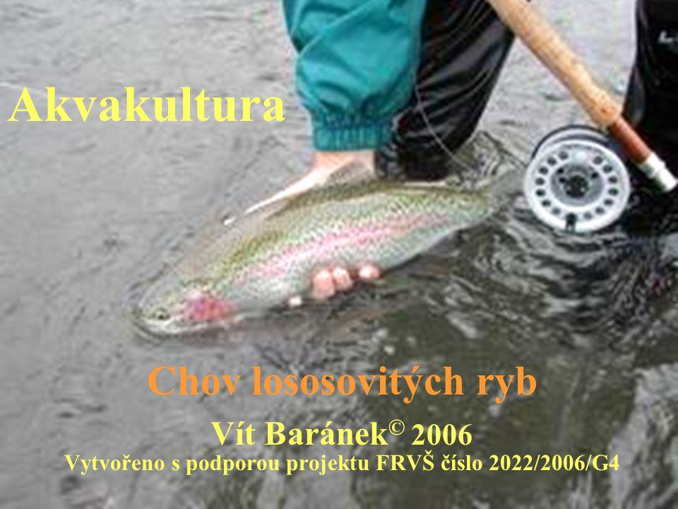 Akvakultura Chov lososovitých ryb Vít Baránek © 2006 Vytvořeno s podporou projektu FRVŠ číslo 2022/2006/G4