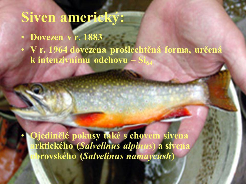 Siven americký: Dovezen v r. 1883 V r. 1964 dovezena prošlechtěná forma, určená k intenzivnímu odchovu – Si 64 Ojedinělé pokusy také s chovem sivena a