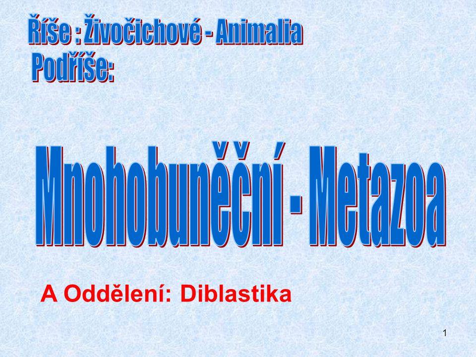 1 A Oddělení: Diblastika