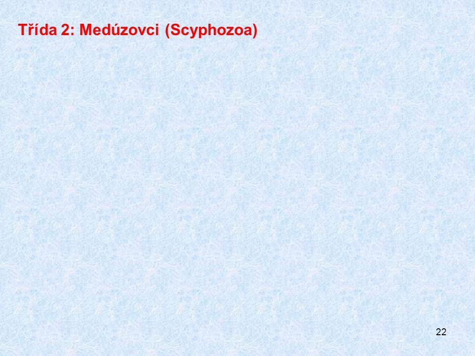 22 Třída 2: Medúzovci (Scyphozoa)