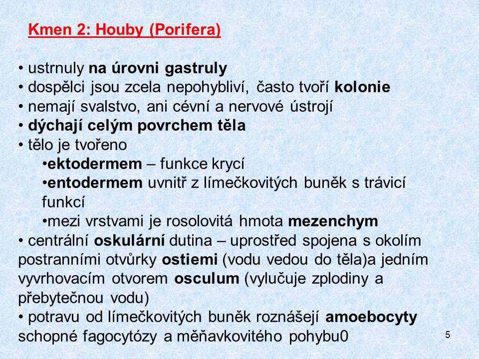 26 Kalichovka