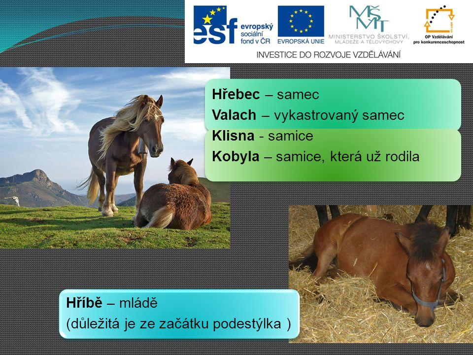 HIPOLOGIE = věda zabývající se koňmi DOMESTIKACE JE: a)zdomácnění b)domovní prohlídka c)chalupaření.