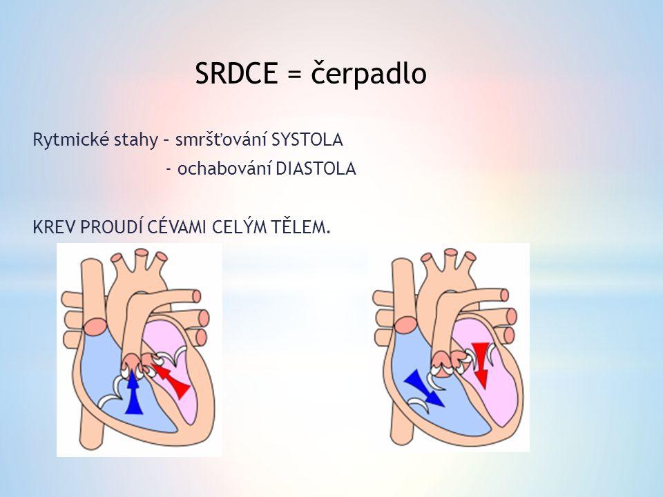 1.Horní dutá žíla 2. Plicní tepna 3. Plicní žíla 4.
