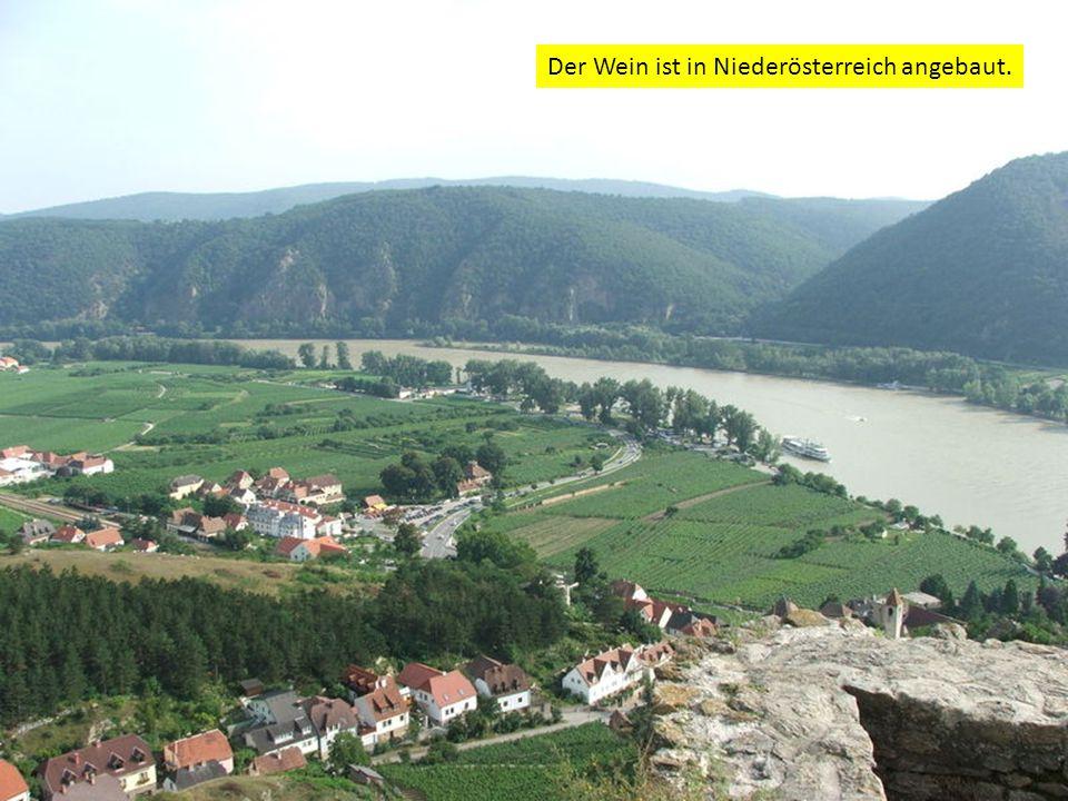 Der Wein ist in Niederösterreich angebaut.