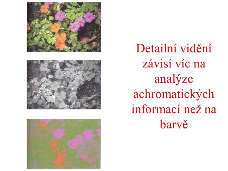 Detailní vidění závisí víc na analýze achromatických informací než na barvě