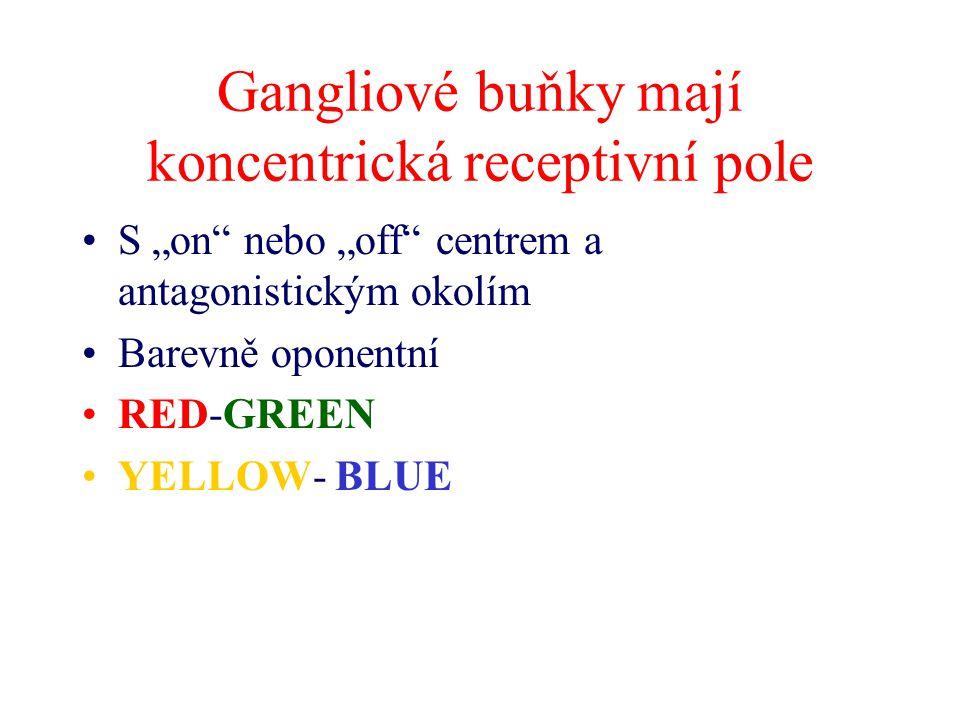 """Gangliové buňky mají koncentrická receptivní pole S """"on"""" nebo """"off"""" centrem a antagonistickým okolím Barevně oponentní RED-GREEN YELLOW- BLUE"""