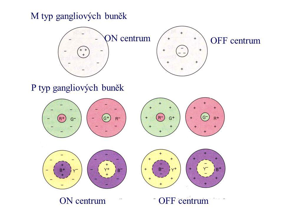 M typ gangliových buněk P typ gangliových buněk ON centrum OFF centrum ON centrumOFF centrum