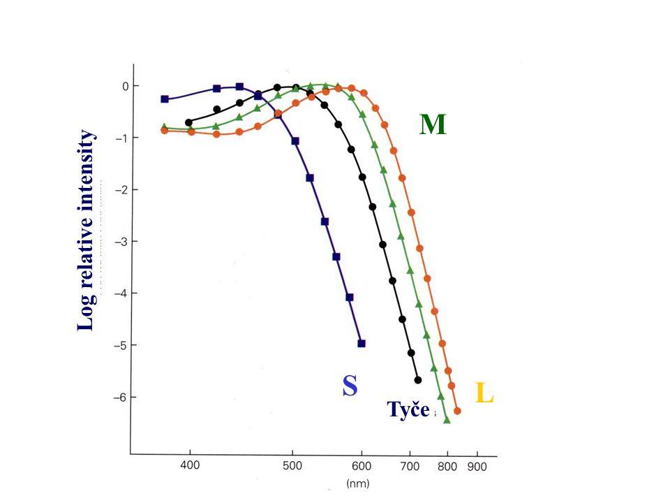 Barevné vidění závisí na 3 oponentních mechanismech zachycují variace v 1 – RED-GREEN kanálu 2 – YELLOW- BLUE kanálu 3 – achromatickém kanálu – SVĚTLO - TMA Hering, konec 19.