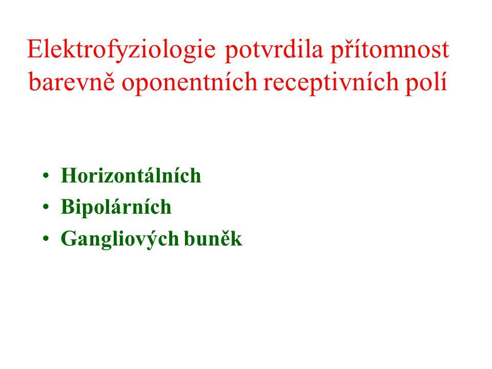 Elektrofyziologie potvrdila přítomnost barevně oponentních receptivních polí Horizontálních Bipolárních Gangliových buněk